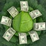 cabbage-money