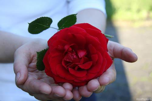 Романтичный подарок девушке, любимой 1